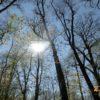 Frühlingssonne Meditation Anleitungen richtig meditieren lernen