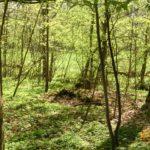 Waldoase
