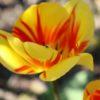 Tulpe mit Käfer Entspannung Tipps gegen Stress Kontakt