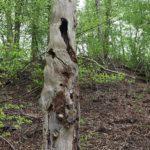 natürlicher Baumstamm