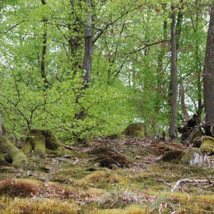Wurzeln des Waldes