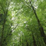 Das Grün des Waldes 1