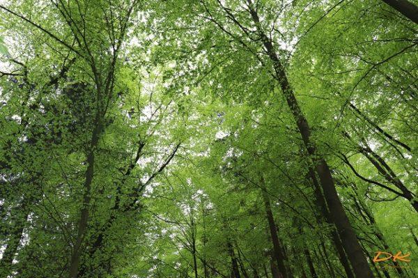 Das Grün des Waldes Blog