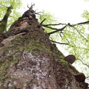 Baum mit Pilzen