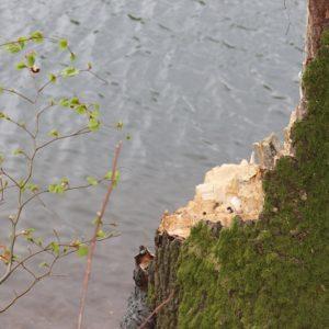 Baumstamm am Wasser