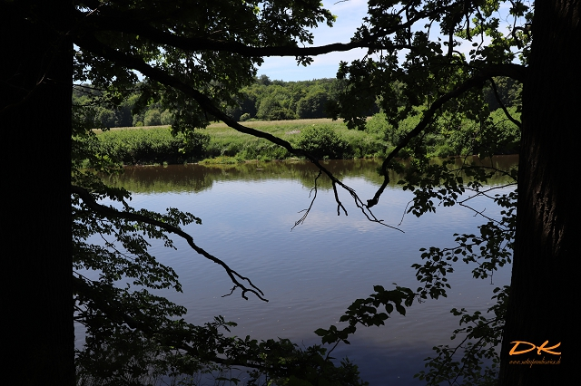 Fluss hinter Bäumen